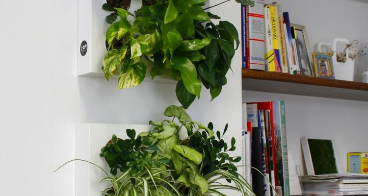 Giardini interni e pareti in verde verticale