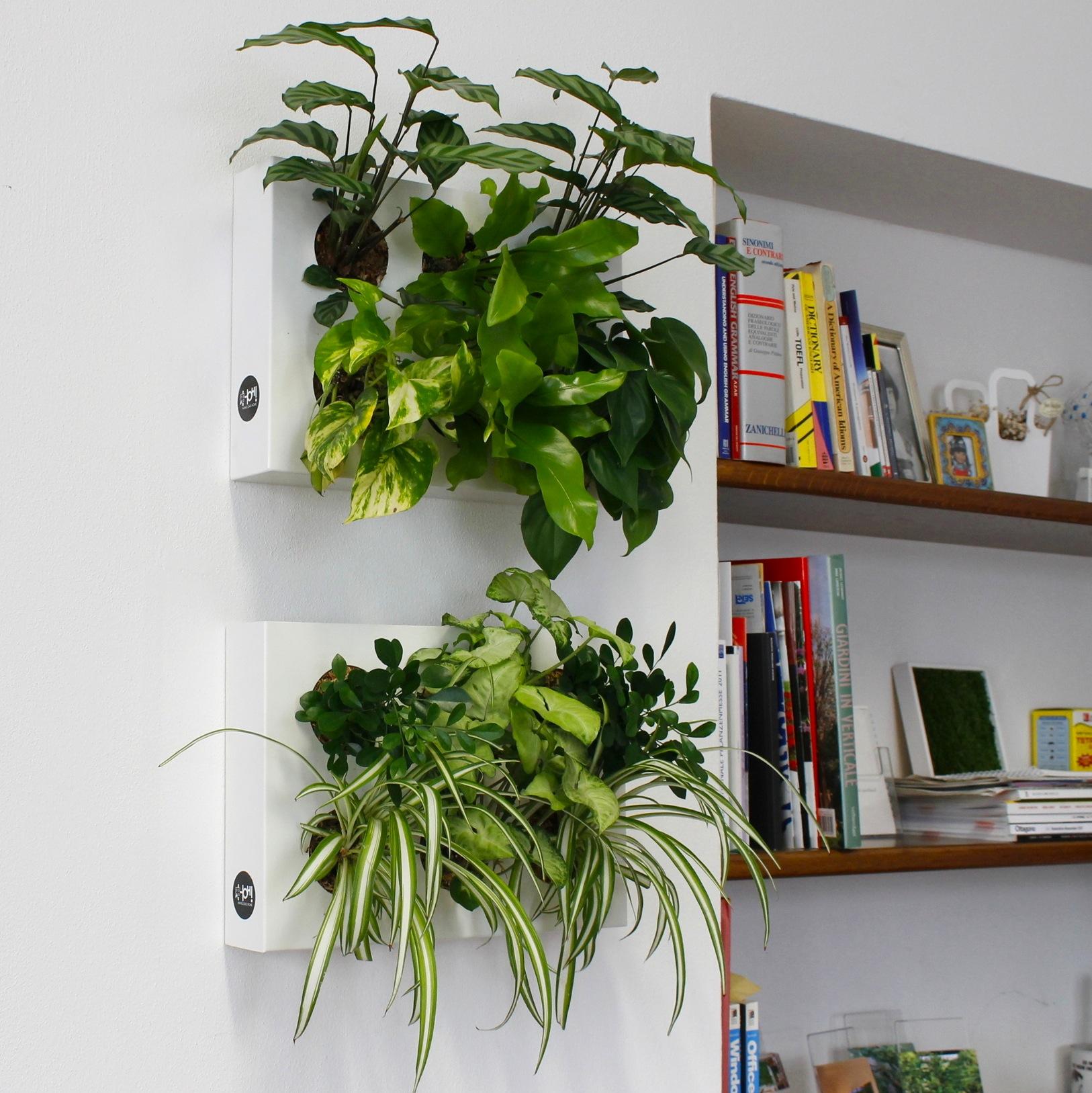 Giardini interni e pareti in verde verticale for Giardini da arredare