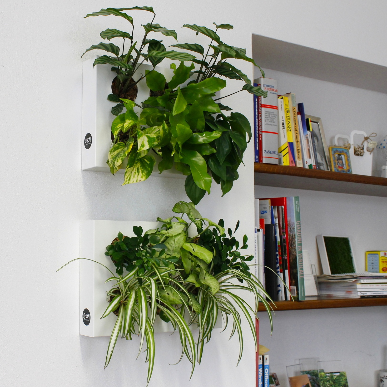 Giardini interni e pareti in verde verticale - Pareti verdi per interni ...